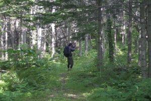 利尻町森林公園