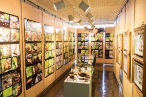 利尻町立博物館