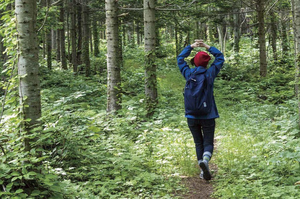 利尻の森自然探索