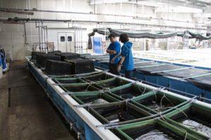 ウニ種苗生産センター