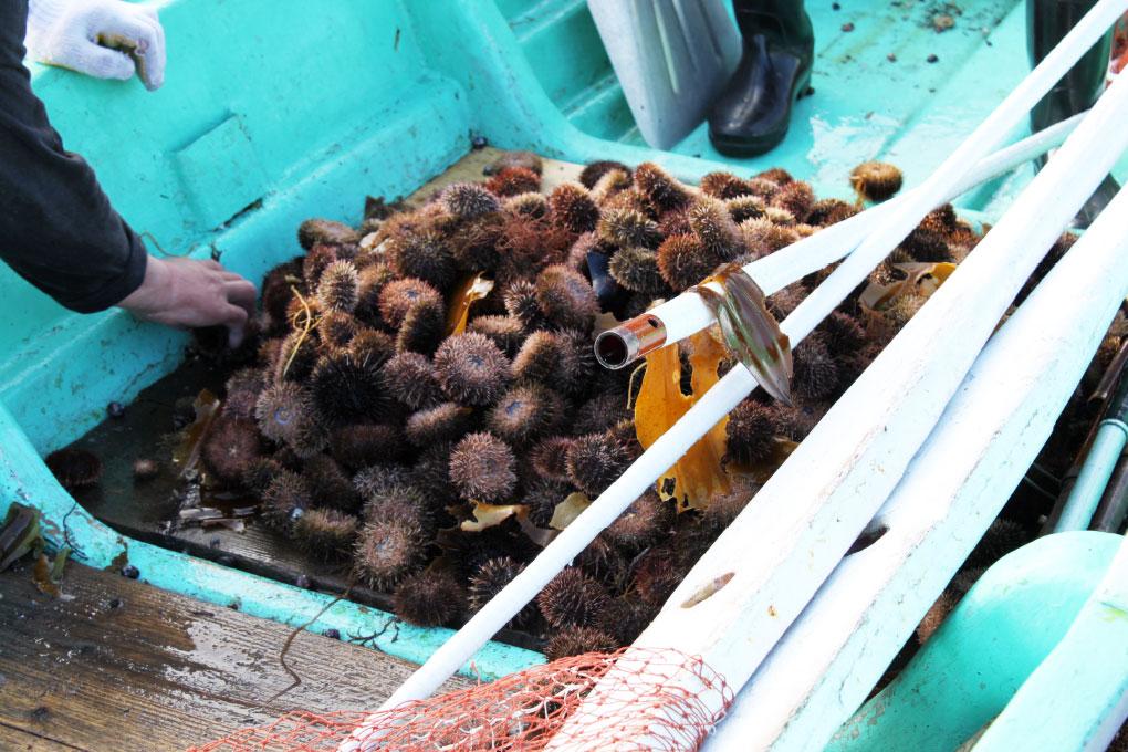 利尻の海でとれる海産物