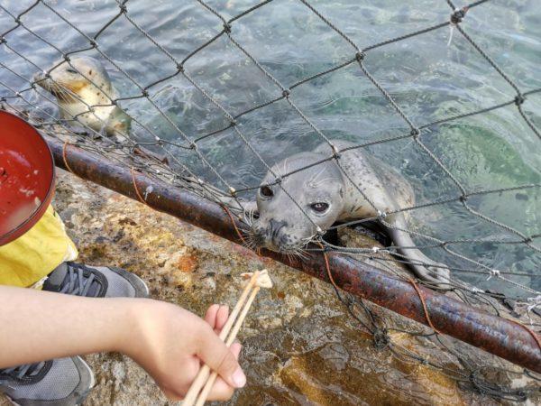 アザラシ餌やり体験